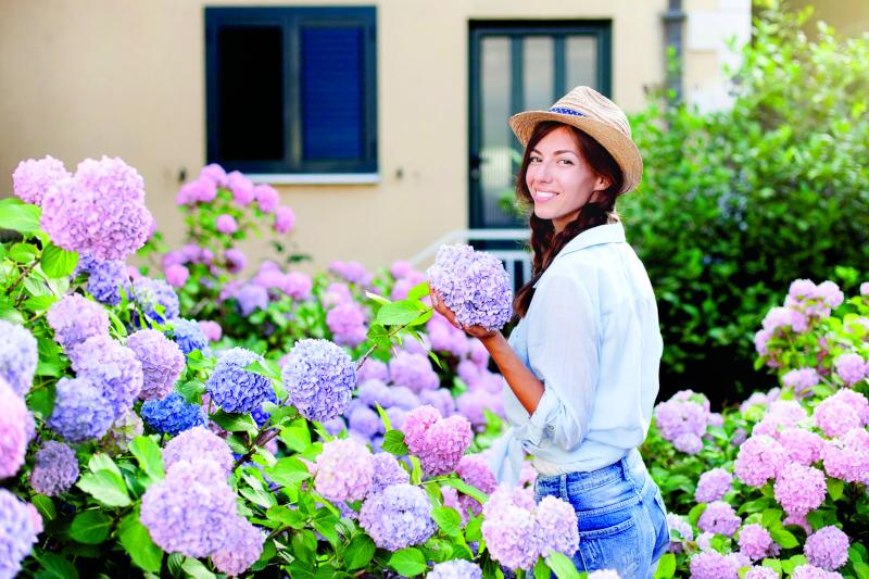 Облако в саду – гортензия в цвету