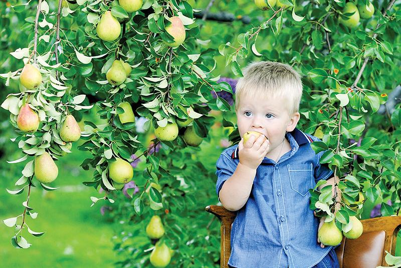 Сажай плодовые деревья